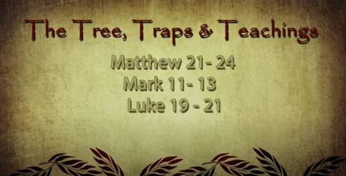 The Tree, Traps, and Teaching (3/14/2021)